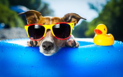 Sunwear is Good Eye Health Care:  Six reasons you should wear sunglasses more often.
